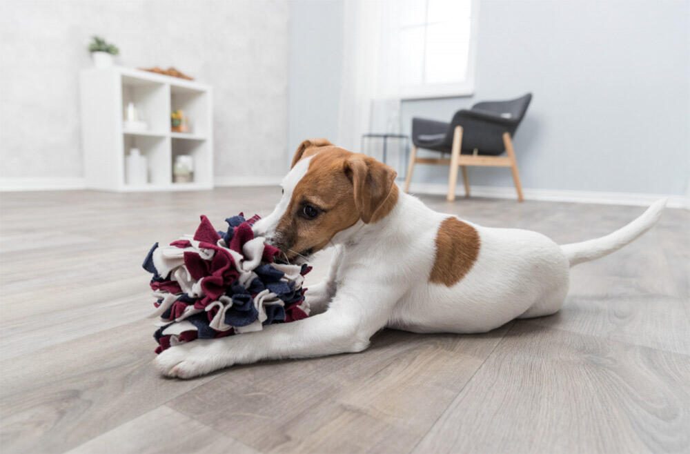 Dog Activity Snuse Bold